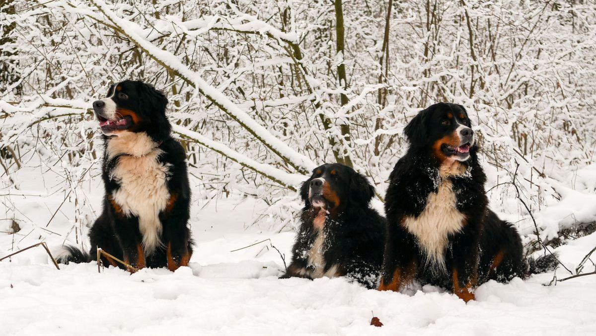 Schnee Schnee Schnee 2021 - Magnus, Lumich und Isa