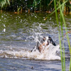 Schwimmanfänger Fee