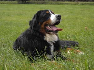 Ebra, gestorben 12. Juli 2010