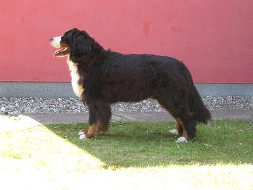 Farino 5 1/2 Jahre alt