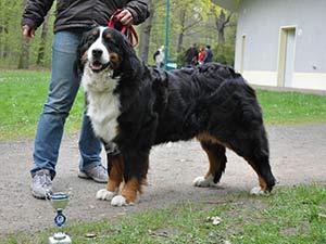 Fortuna, gestorben 6. Juli 2015