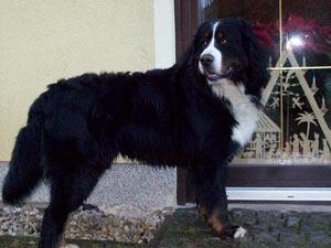 Frodewin Freiherr,knapp 2 Jahre alt