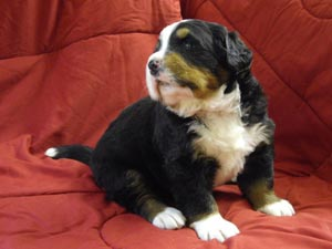 Gretchen 3 Wochen alt