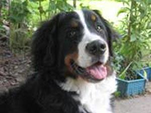 Gretchen im August 2010