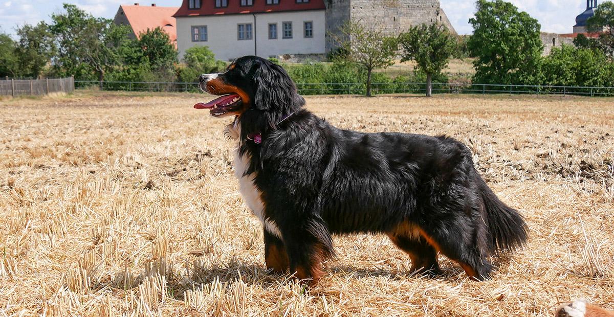Isabeau Lady vom Ritter Burkart